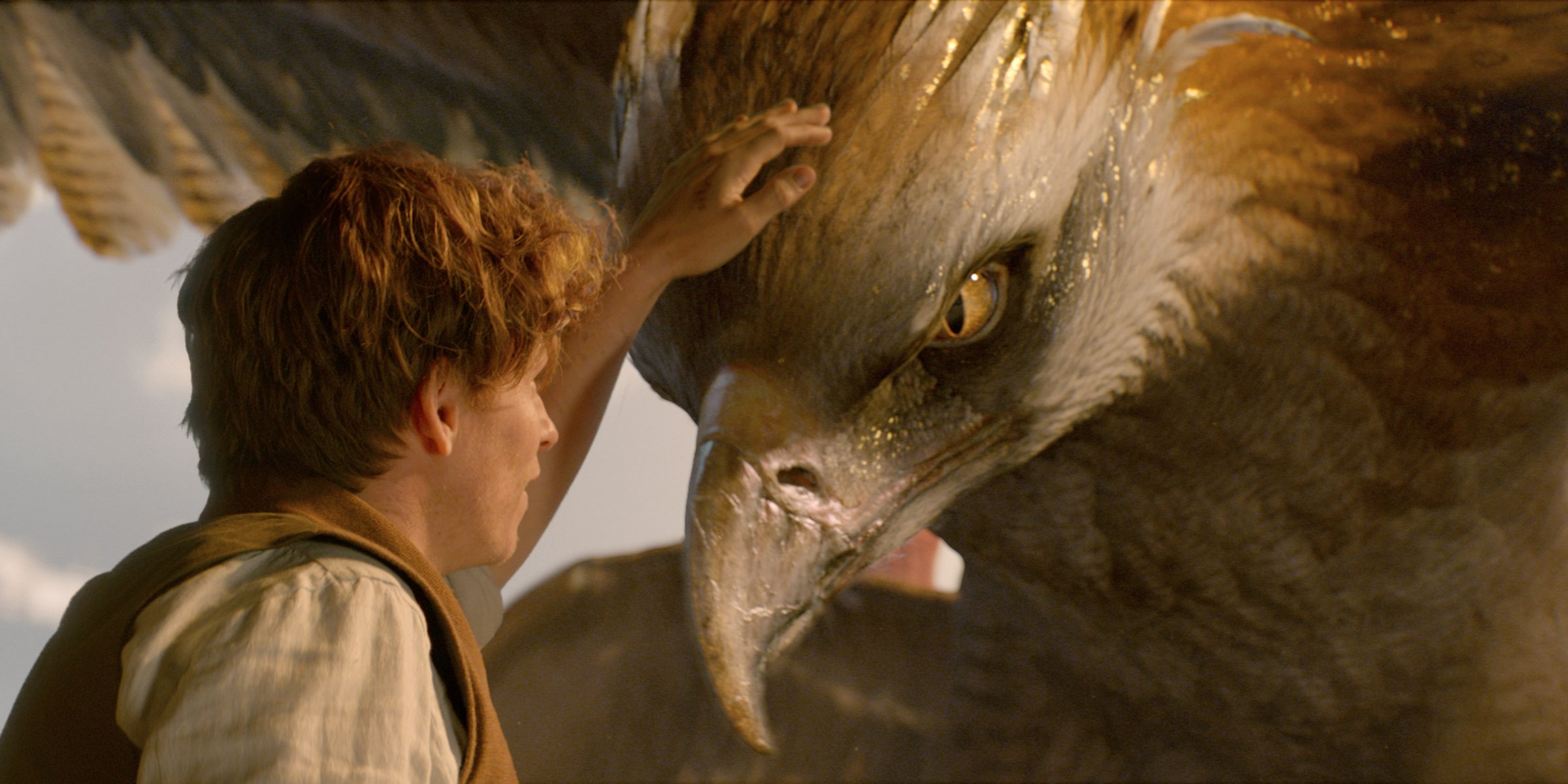 eddie-redmayne-as-newt-scamander-with-a-thunderbird-in-fantastic-beasts