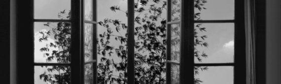 [505] アッバス・キアロスタミは映画より写真の方が好きだった?